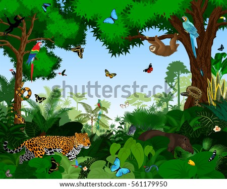 rainforest with animals vector