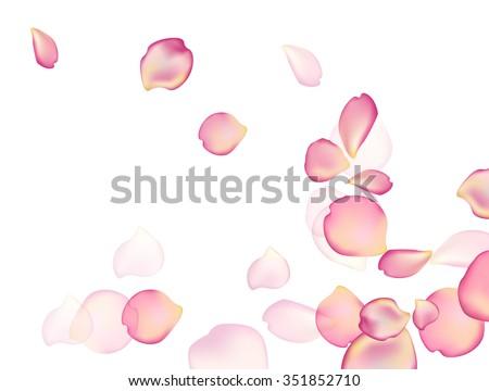 random rose petals against