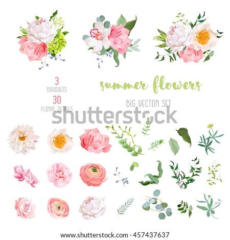 ranunculus  rose  peony  dahlia