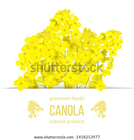 rapeseed blossom flowers card