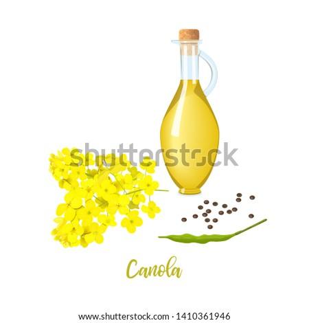rapeseed oil in bottle  canola