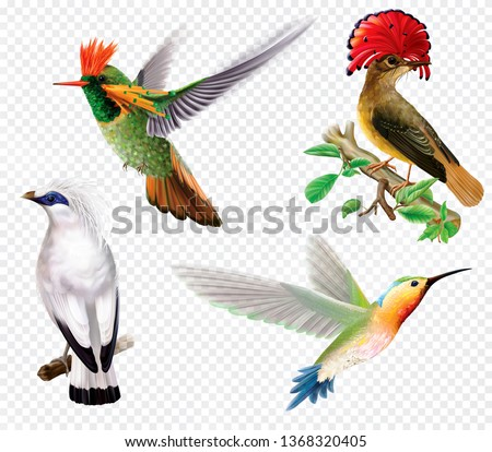 Rare exotic tropical birds and hummingbird on a transparent background. Vector mesh and curves illustration