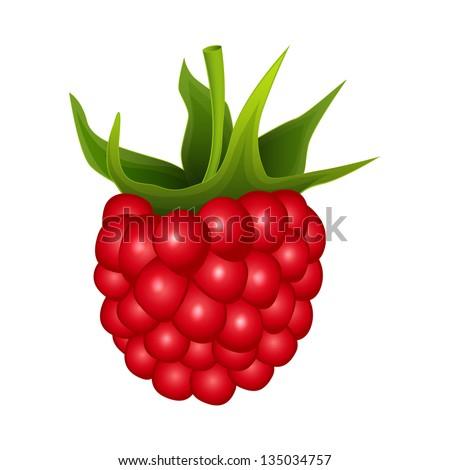 raspberry on a white background