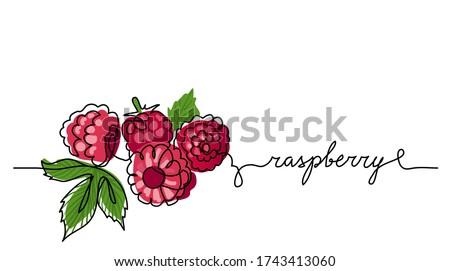 raspberry vector color
