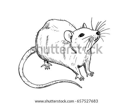 rat sketch drawn by hand black
