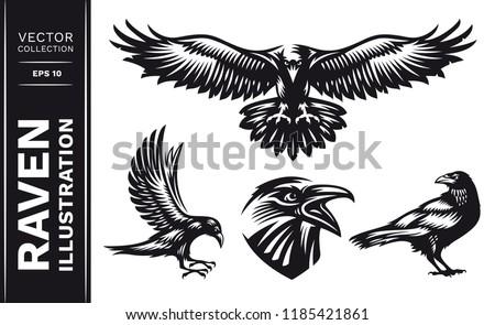 raven bird collection   vector