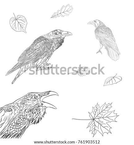 raven bird leafs