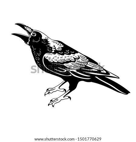 raven birdt isolated on white