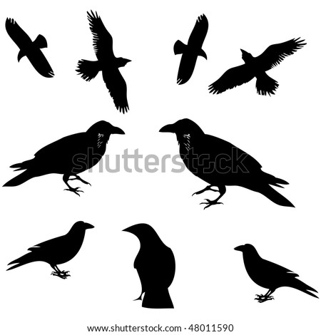 Raven, Crow And Other Bird Siluete Vector - 48011590 : Shutterstock