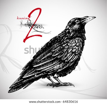 Raven drawing 2 high quality vector