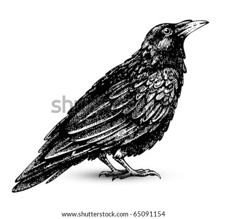 Raven drawing high quality vector - stock vector