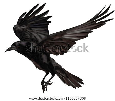 raven flying  black raven