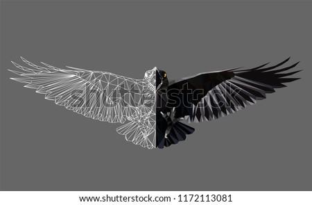 raven in flight on grey