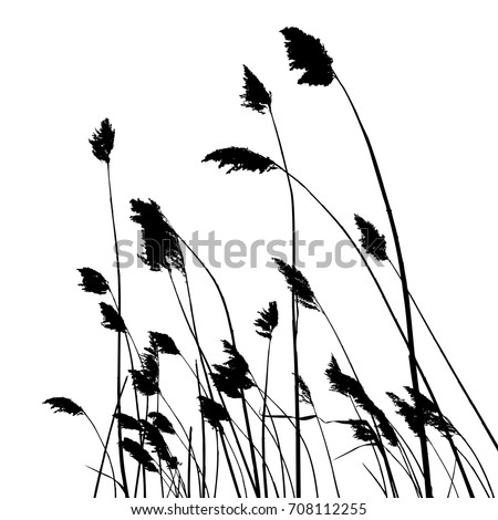 real reed silhouette   vector