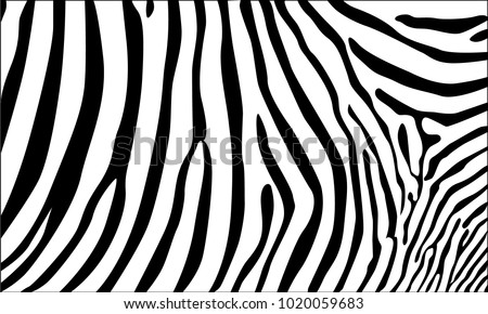 Stock Photo Realistic abstract zebra skin pattern vector illustration