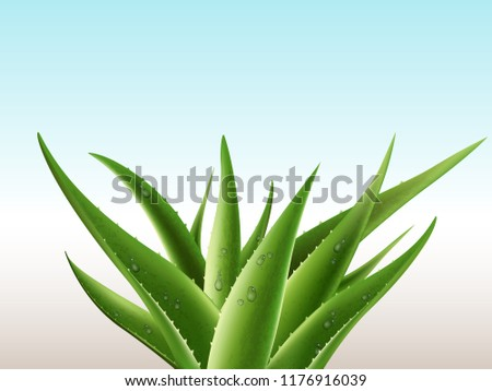 Realistic aloe vera medicinal plant and it's sections with fresh drops of water in 3D on light background. Isolated vector illustration with place for your text
