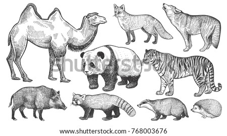Realistic animals set. Camel, panda, fox, wolf, tiger, boar, red panda, hedgehog and badger isolated on white background. Vector illustration art. Vintage engraving. Handmade graphic. Black and white.