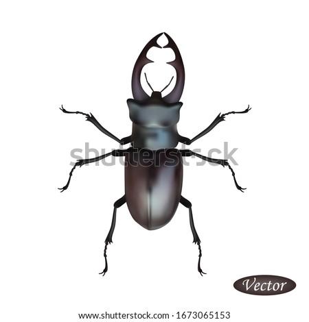 realistic beetle deer isolated