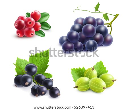 realistic berries set with