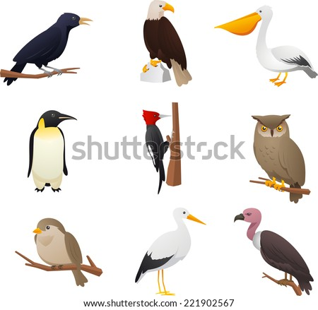 realistic bird collection  with