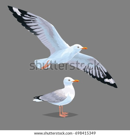realistic bird seagull isolated