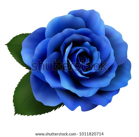 realistic blue rose  queen of