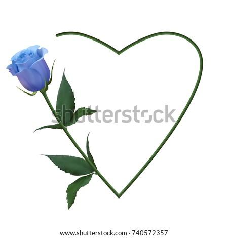 realistic blue rose  romantic