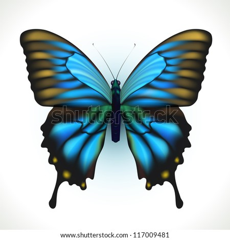Realistic bright Butterfly isolated on white. Vector Illustration