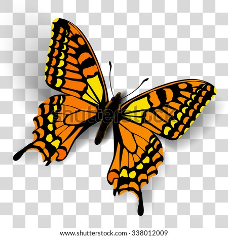 realistic butterfly on
