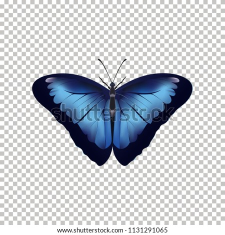 realistic butterfly top view
