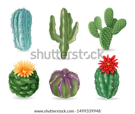 Realistic cactuses. Decorative desert exotic cactus prickly plants. Wild and houseplant succulent cacti. 3d isolated vector set