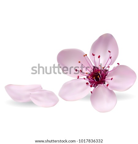 Realistic cherry blossom, flowers of sakura. Projects template for business. Vector art and illustration.