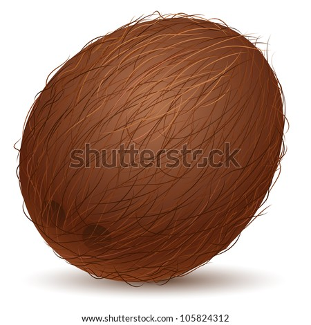 Realistic coconut.  Illustration for design on white background