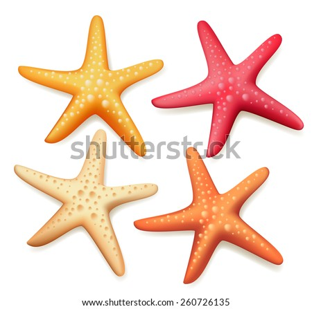 Realistic Colorful Starfish Set in White Background. Vector Illustration