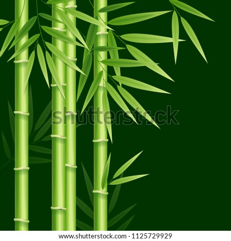Realistic 3d Detailed Bamboo Japanese, Chinese Green Plant Background Card Spa or Zen Concept for Web. Vector illustration