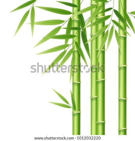 realistic 3d detailed bamboo