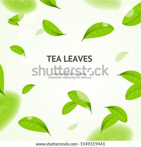 Realistic 3d Detailed Elements Vibrant Green Tea Leaves Concept Banner Card Background with Place for Text. Vector illustration