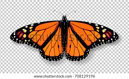 realistic 3d monarch butterfly