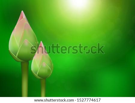 realistic 3d thai pink lotus