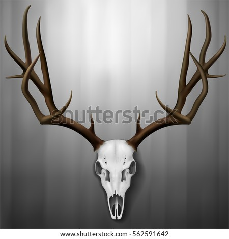 Royalty Free Stock Photos And Images Realistic Deer Skull