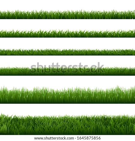 realistic grass borders green