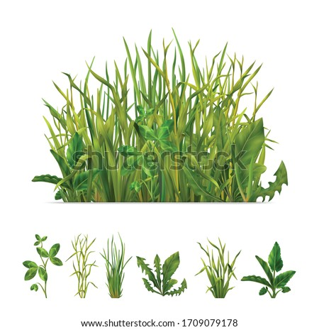 Realistic grasses mix and separate individual green plants set with clover dandelion chives isolated vector illustration