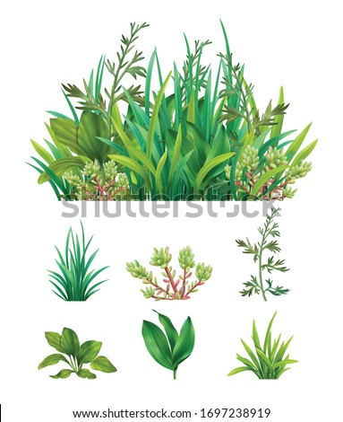 Realistic green herbs succulents with  grasses mix combination and separate individual plants set isolated vector illustration  Foto d'archivio ©