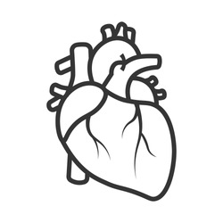 Realistic Heart icon isolated on white background. Vector medical heart logo. Line art of people heart.