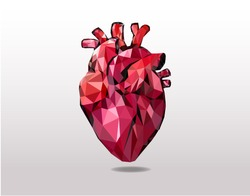 Realistic heart, low poly art.