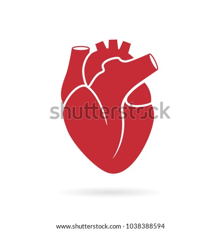 Realistic human heart vector drawing isolated on white background