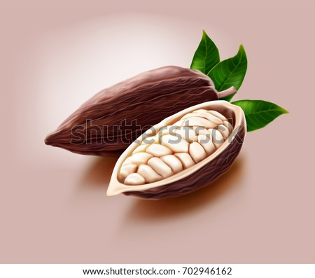 realistic illustration of dry cocoa pods and a pod cut in half which contains many beans inside, isolated on cream background
