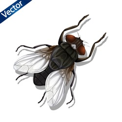 Realistic insect fly. 3D vector graphics. tsetse vector illustration on white background. vector realistic insect illustration. tsetse fly Insect lying on the floor symbol vector.