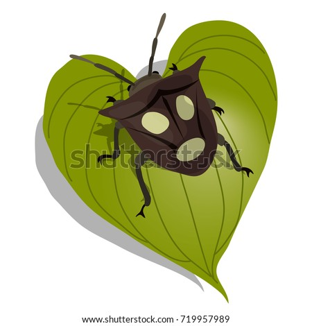 Realistic insect vector illustration. Shield Bug (stink bug) on leaf. Bug with human face on back.
