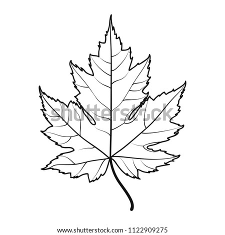 realistic maple leaf line drawing